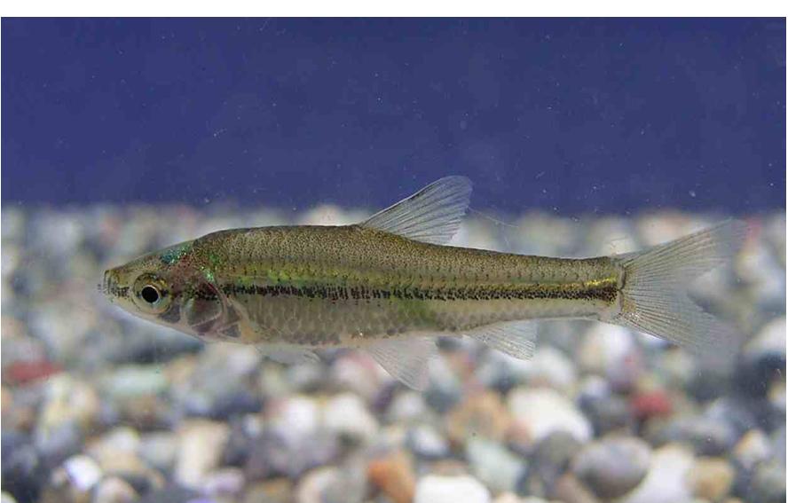 川 に いる 魚