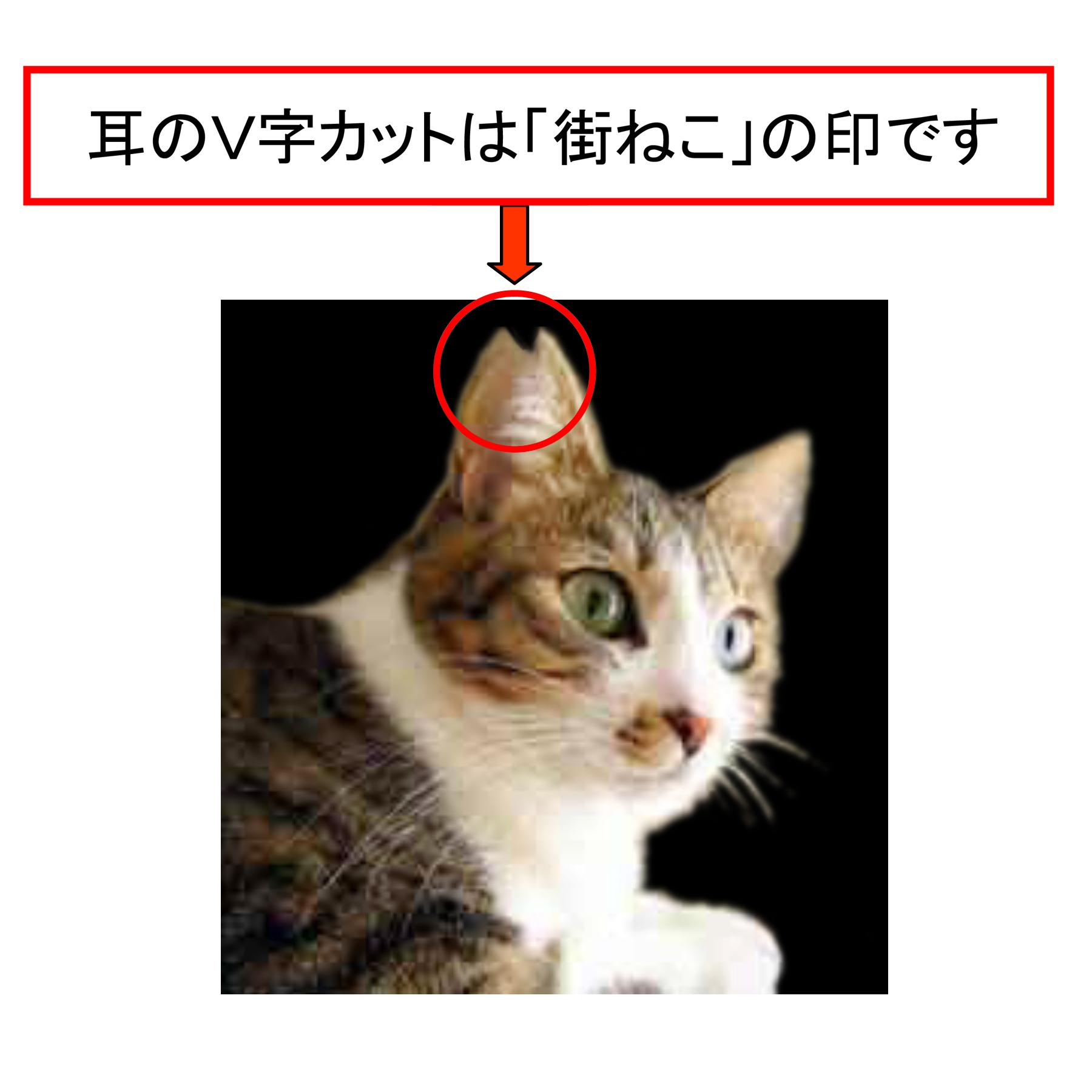 野良猫 避妊 手術